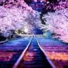 Sakura Spring Background Music - Japan Relaxing Music Piano Instrumental