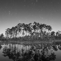 Midnight Swamp Echos