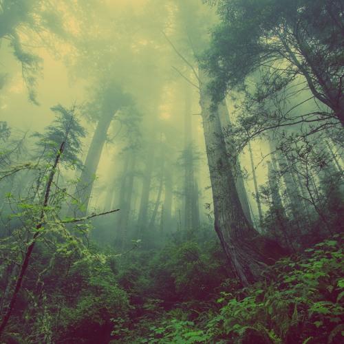 Dj set - Dark/Forest Progressive