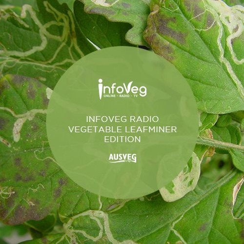 InfoVeg Radio - Vegetable Leafminer: Protecting our industry from a destructive pest
