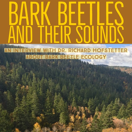Bark beetles and their sound
