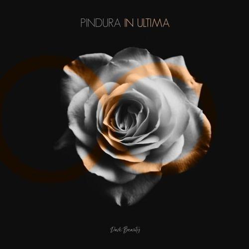 Pindura - In Ultima (Radio Edit)