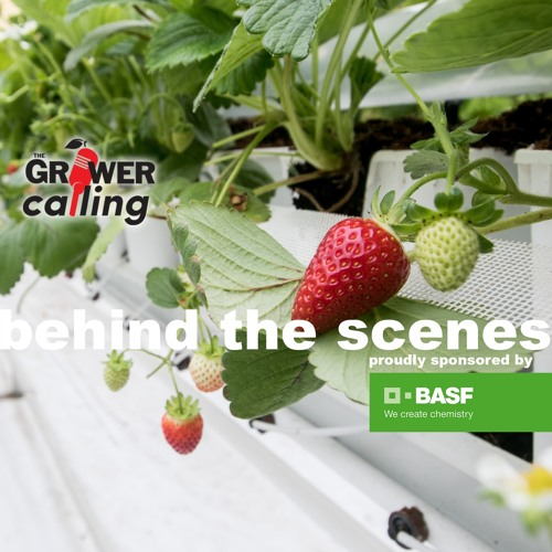 """Behind The Scenes"" Danny Mucci talks about greenhouse-grown strawberries"