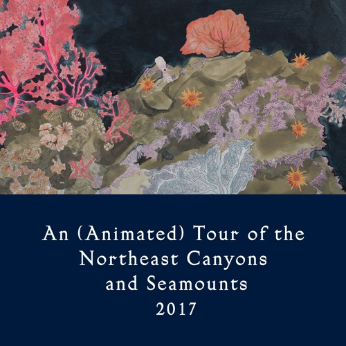 An (Animated) Tour Of The Northeast Canyons And Seamounts (2017)