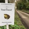 Toad Patrol - March 2018