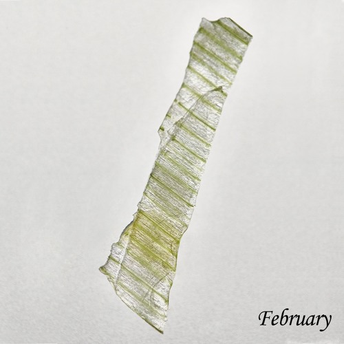 Djebali - February (Once A Month)