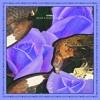 HVWKS - Black And Blue Ft. Akacia