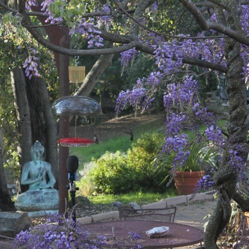Humming hummingbirds by the bird feeder