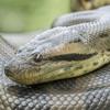 Anaconda [EF x $w@mp]