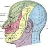 Nerve 7