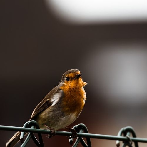 The Robin and the River's Story - FLOW orchard project on the River Exe