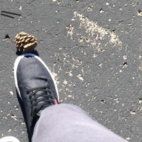 kick the pinecone