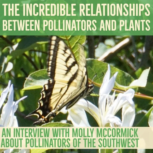 The incredible relationships between pollinators and plants
