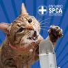 Volunteers across the province: Behind the scenes look - Animals' Voice Pawdcast- Season 7,Episode 7