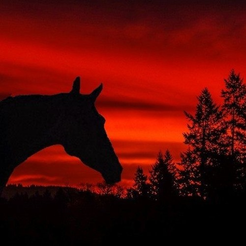 "NYTE EEGLE - ""RED SKY"" - (a journey...)"