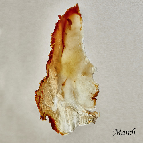 Djebali - March (Once A Month)