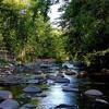 Beaver Creek: A Marvel and A Sanctuary