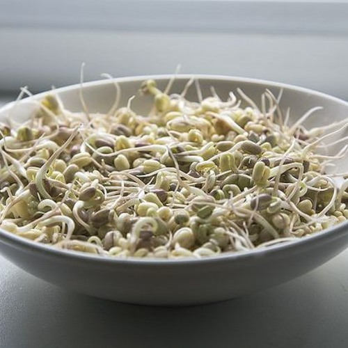 Alimentos germinados: nutrição pronta para ser absorvida pelo corpo