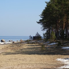 Silence (Estonian Forest)