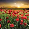 """March of the Red Poppies""  for Anzac Day Australia 25th April 2018"