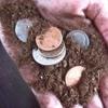 dirt cheap - IN