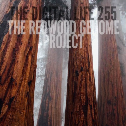 The Redwood Genome Project