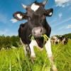 Våra mest älskade sånger vol. 1 - Och äter gräs / Our most loved songs vol. 1 - Eating grass