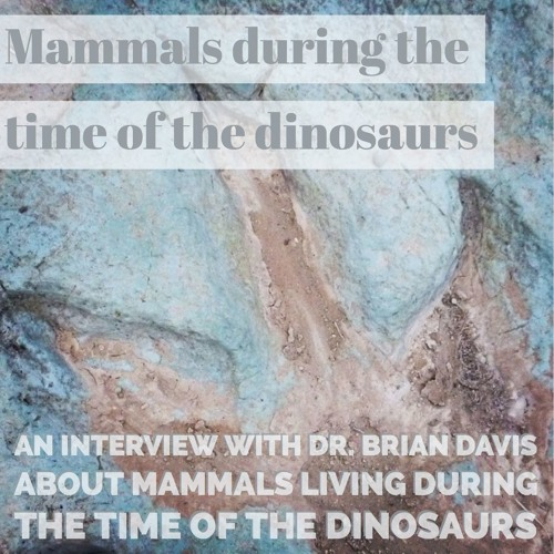 Mammals during the time of the dinosaurs