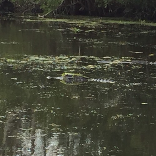 Ep #1--(Louisiana)Small Business In The Bayou When The Economy Got You In A Gator Death Roll