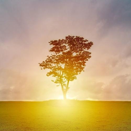 Nurturing Beginnings - A Morning Meditation