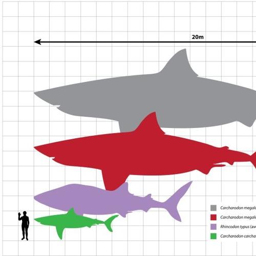 003 - Diverse Sharks, Diverse Scientists (feat Melissa Cristina Marquez)