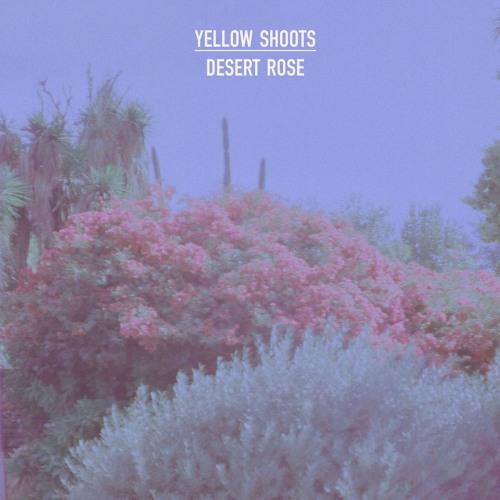 yellow shoots - desert rose