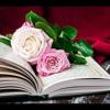 Surah Al Baqarah  Mishari Rashid Al Afasy + Download سورة البقرة كاملة مشاري العفاسي + تحميل