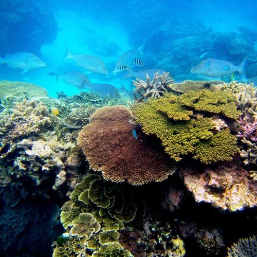 The Reef Is Quiet. Too Quiet.