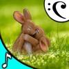 Happy Easter Music   Easter Is Coming - eluukkanen