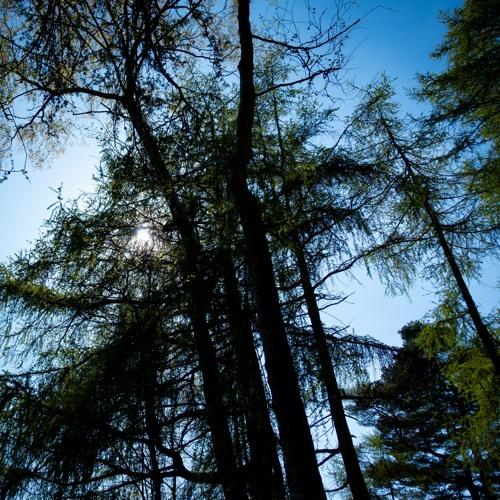 Blue Sky Green Trees