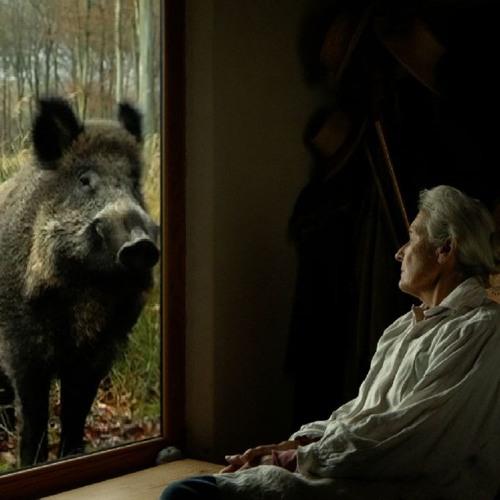 Essay Film Festival 2018:  Va, Toto! Discussion