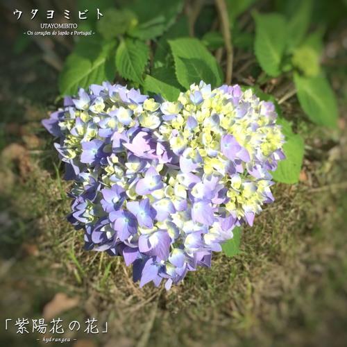 紫陽花の花 ウタヨミビト 30sec