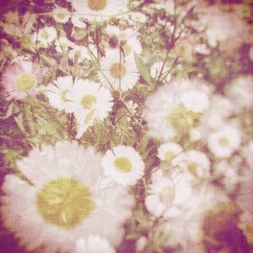 wlr039 Valotihkuu - Fragile Melodies