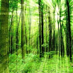 Guardians Of The Rainforest Sleep Meditation