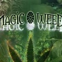 Magic Weed (Sweet Melody Edition Weekend Spezial) Artwork