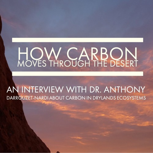 How carbon moves through the desert