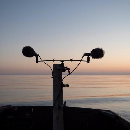 A Row with Birds - 12/5/2018 - Makholma Bay by Night