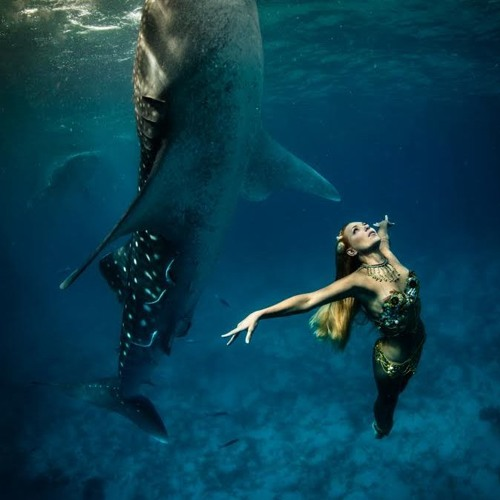 Wild Voices: Dancing with tiger sharks and humpback whales, Hannah Fraser