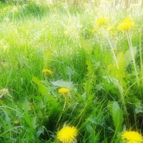 Grass Still Grows, Birds Still Sing