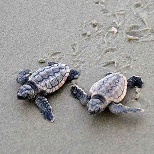 Turtle Time in Sanibel