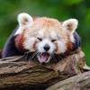 Imagine Dragons - Panda | Break The Ice Parody