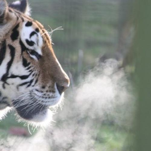 Tiger Breath
