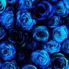 Roses Are Blue - MKG