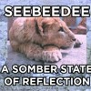 Somber State Of Reflection